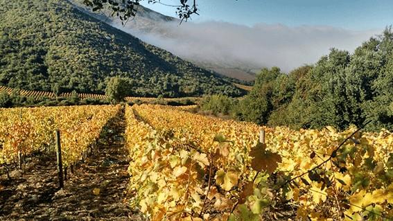 La vallée de Colchagua-Chili